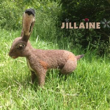 Le lièvre de Jill